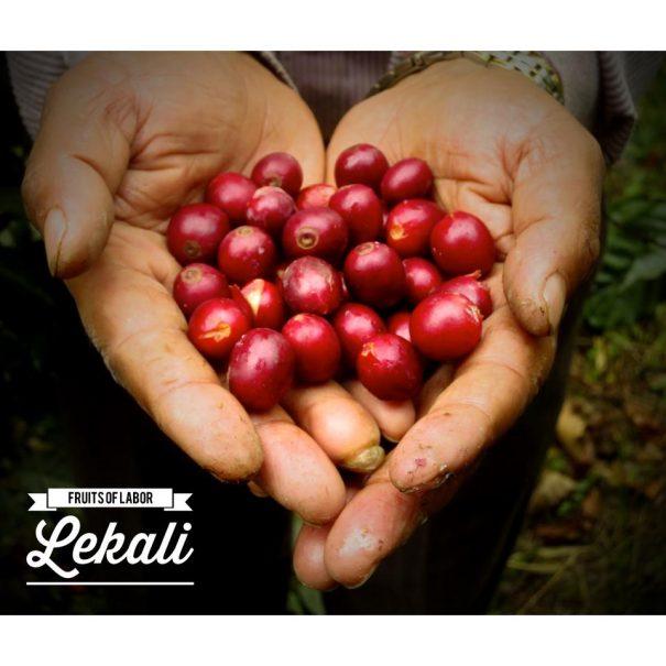 Coffee Lekali