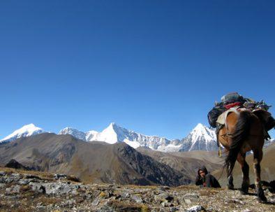 Bhutan Horse