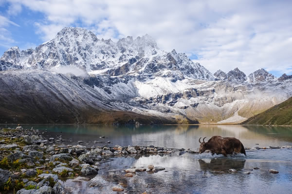 Gokyo Lake with Yak